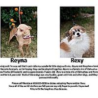 Adopt A Pet :: Reyna - Gilbert, AZ