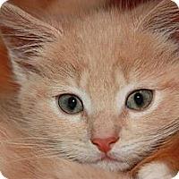 Adopt A Pet :: Juniper (LE) - Little Falls, NJ