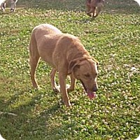 Adopt A Pet :: Riley - Irvington, KY