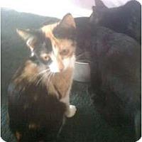 Adopt A Pet :: Marissa - Mobile, AL