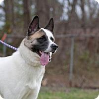 Adopt A Pet :: Zoey - Toms River, NJ