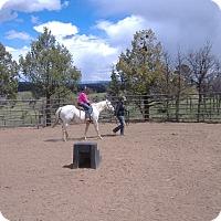 Adopt A Pet :: Calamity Jane - Durango, CO