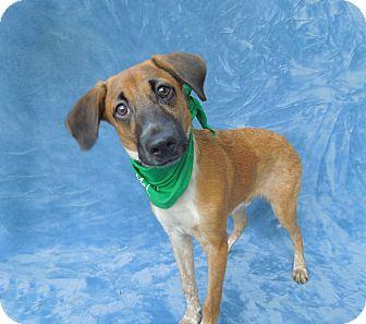 Shepherd (Unknown Type) Mix Puppy for adoption in Charlotte, North Carolina - Redington