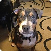 Adopt A Pet :: Noel - San Diego, CA