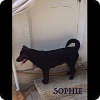 Adopt A Pet :: Sophie - Guelph, ON