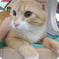 Adopt A Pet :: Redford - LaGrange Park, IL