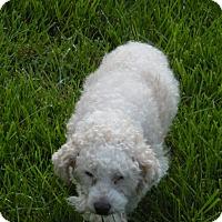 Adopt A Pet :: Tilly - Baltimore, MD