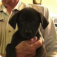 Adopt A Pet :: Vern - Chico, CA
