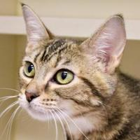Adopt A Pet :: Autumn - Chattanooga, TN