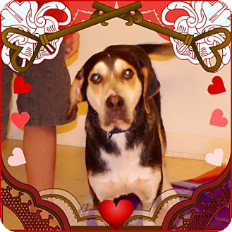 Coonhound/German Shepherd Dog Mix Dog for adoption in Homestead, Florida - Soho