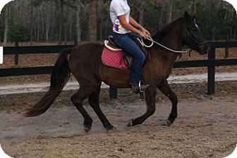 Pony - Other Mix for adoption in York, South Carolina - Storm