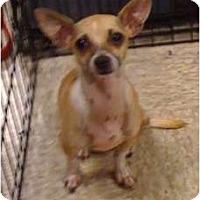 Adopt A Pet :: Bentley - Fowler, CA