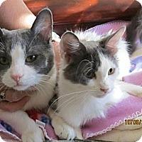 Adopt A Pet :: Amber - Rancho Cordova, CA