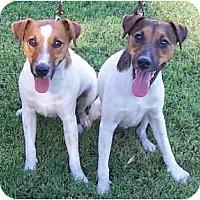 Adopt A Pet :: BRUTIS & DOBI - Phoenix, AZ