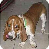 Adopt A Pet :: Redmond - Phoenix, AZ