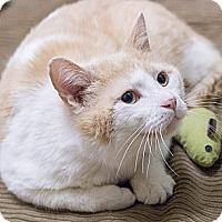 Adopt A Pet :: Marco Polo - Chicago, IL