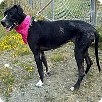 Adopt A Pet :: Lexi - Crescent City, CA