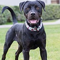 Adopt A Pet :: Tanner - San Diego, CA