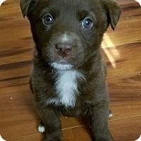 Adopt A Pet :: Kaden - Fredericksburg, VA