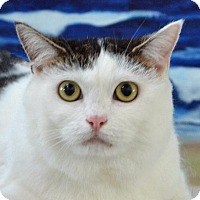 Adopt A Pet :: Lucy - Englewood, FL