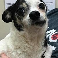 Adopt A Pet :: Dottie - Centerville, GA