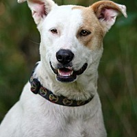 Adopt A Pet :: Cinnamon - Union, CT