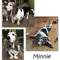 Adopt A Pet :: Minnie - Marietta, GA