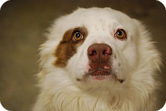 Border Collie Mix Dog for adoption in Coventry, Rhode Island - Hank