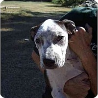 Adopt A Pet :: Patches/Tequila - Scottsdale, AZ