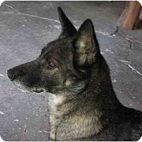 Adopt A Pet :: Zena - BC Wide, BC