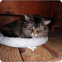 Adopt A Pet :: Tulsa - Warren, MI