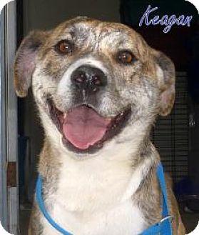 Shiba Inu/Retriever (Unknown Type) Mix Dog for adoption in Georgetown, South Carolina - Keagan