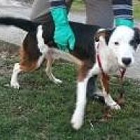 Adopt A Pet :: hankie - Prestonsburg, KY