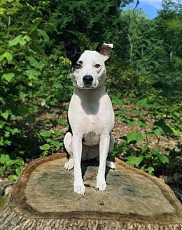 Border Collie Mix Dog for adoption in Asheboro, North Carolina - Daphne
