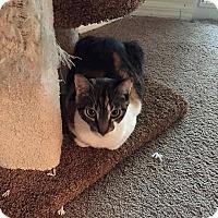Adopt A Pet :: Lexi - Tampa, FL