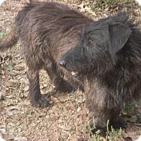 Adopt A Pet :: Shaggy - Buchanan Dam, TX