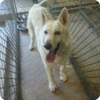 Adopt A Pet :: Mia - Greeley, CO