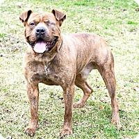 Adopt A Pet :: Brinks - APPLICATIONS CLOSED - Livonia, MI