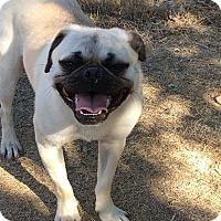 Adopt A Pet :: Frank - Las Cruces, NM