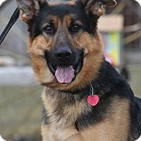 Adopt A Pet :: Rommel - Hamilton, MT