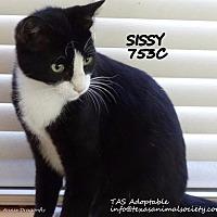 Adopt A Pet :: Sissy - Spring, TX