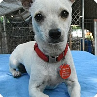 Adopt A Pet :: Bianca - Pittsburgh, PA