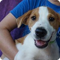 Adopt A Pet :: Mo - Oviedo, FL