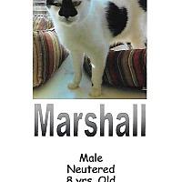 Adopt A Pet :: Marshall - Fort Scott, KS