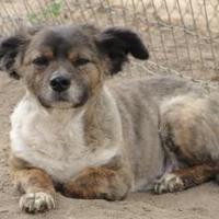 Adopt A Pet :: Fluffy Benton - Fresno, CA