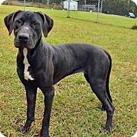 Adopt A Pet :: 10309009 TILLY - Brooksville, FL