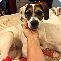 Adopt A Pet :: Mattie - Normal, IL