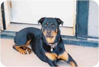 Rottweiler Dog for adoption in Sedona, Arizona - Neena