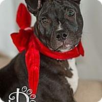 Adopt A Pet :: Bogey - Tallahassee, FL