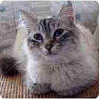 Adopt A Pet :: Violet - Arlington, VA